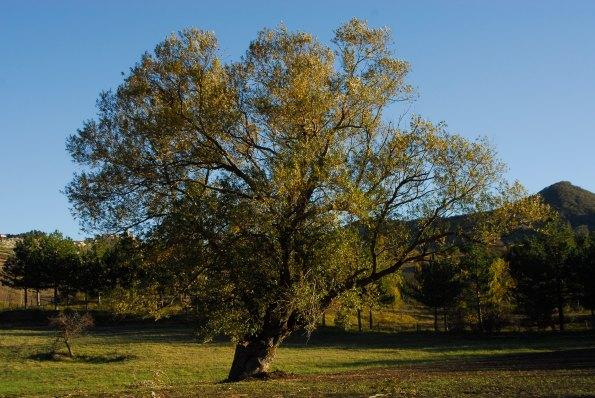 Foto di Valentina Perniciaro _l'albero più bello_